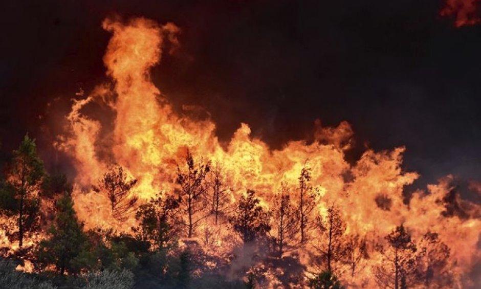 8753592299d1 Πυρκαγιά Αττική  Σε πλήρη εξέλιξη η έρευνα για τους αγνοούμενους -  Μακραίνει ο κατάλογος των